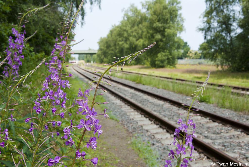Flora bij het rangeerterrein